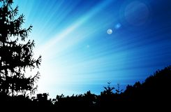 Sun over forest Royalty Free Stock Images