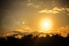 Sun over forest at summer Royalty Free Stock Image