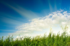 Sun over green grass Royalty Free Stock Photography