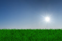 Sun over green meadow Stock Photo