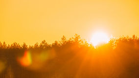 Sun Over Horizon Woods Or Forest With Orange Sunset Sky. Natural Colors Royalty Free Stock Image