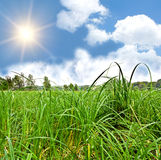 Sun over meadow Stock Image
