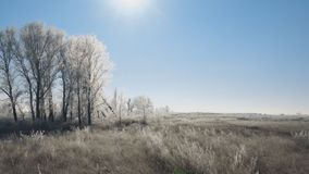 Sun over meadows, bushes and trees covered with frost. Fabulous winter landscape stock video