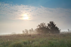 Sun over misty swamp Royalty Free Stock Photography