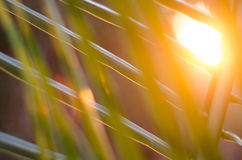 Sun over palm leaves Stock Images