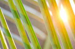 Sun over palm leaves Royalty Free Stock Photo