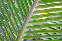 Sun over palm leaves Stock Photo