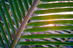Sun over palm leaves Royalty Free Stock Image