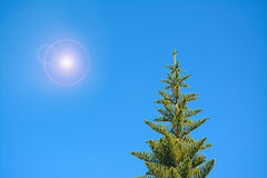 Sun over the pine Royalty Free Stock Photo