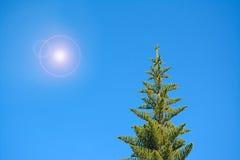 Sun over the pine Stock Photos