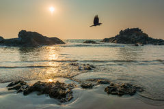 Sun over the sea and  flying crow Royalty Free Stock Photos