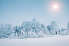 Sun over snowy forest in winter season Stock Images
