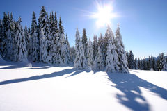 Sun over snowy forest Stock Photography