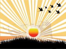 Sun, pássaro e grama Ilustração Royalty Free