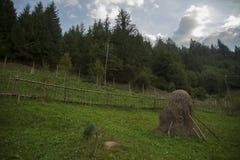 Sun, paisagem e grama verde Fotos de Stock Royalty Free