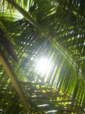 Sun through the palm Royalty Free Stock Photo