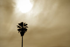 Sun and Palm Background. Yellow tinted image of a palm tree sillhouette against the submerging sun and overcast sky Stock Photos