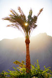 Sun through the palm leaves Royalty Free Stock Photos
