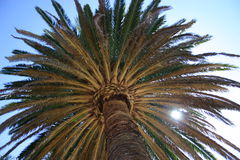 Sun through the palm tree. Relaxing under the shade of a palm tree Stock Images