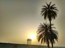 Sun. Palm tree with rising sun royalty free stock photo