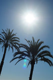 Sun and Palm Trees Royalty Free Stock Image