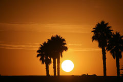 Sun and Palm Trees royalty free stock photography