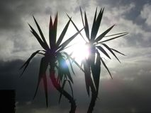 Sun through Palm trees at Clarks Beach. Sun shining through palm trees at clarks beach New Stock Image