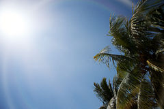 Sun and Palm trees Royalty Free Stock Photos
