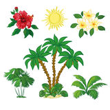 Sun, Palm Trees, Flowers and Leaves Stock Photo