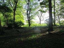 Sun par des arbres Photographie stock libre de droits