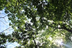 Sun par des arbres Image stock