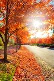 Sun par des lames d'érable d'automne Image libre de droits