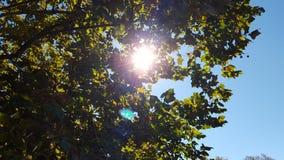 Sun par l'arbre Images libres de droits
