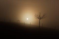 Sun par le brouillard Images libres de droits