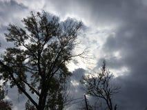 Sun par le ciel nuageux gris-foncé Arbres Images stock
