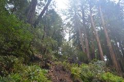 Sun par les arbres Photo libre de droits