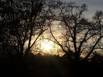 Sun par les arbres photo stock