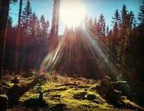 Sun in parco nazionale Immagine Stock