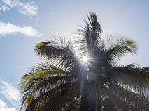 Sun Peaking Through Palm Fronds Stock Photos