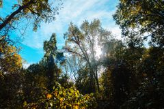 Sun peaking through the woods on a fall day in Akron Ohio. During a hike royalty free stock photo