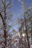 The sun peaks through the trees after an unexpected snow storm. royalty free stock photo