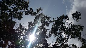 Sun peeking between the branches. View of the sky with a sun glare in the branches stock photo