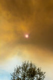 Sun peeking through smoke clouds over tree from wildfire Stock Photography