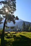 The sun peeks out from behind a pine. Mountain landscape, forest, prairie Royalty Free Stock Photography
