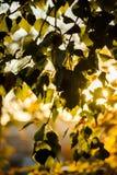 The sun peeps through the foliage.  Royalty Free Stock Photos