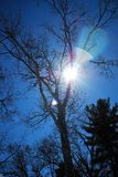 Sun peers though the branches of an oak tree on a late winters afternoon 2. Deep blue skies, two evergreens, warm march afternoon, bright sunlight forming a star Royalty Free Stock Photos