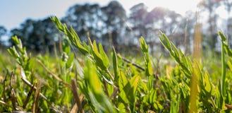 Sun perçant dans un pré d'herbe et de fleurs photographie stock libre de droits