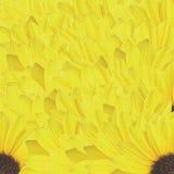 Sun petals Stock Images