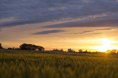 Sun plaçant au-dessus d'un champ de blé du Kansas Photo libre de droits