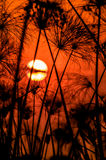 Sun plaçant au-dessus du delta d'Okavango image libre de droits